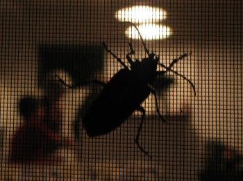 big bug silhouette