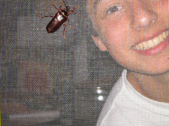 big bug  meets human
